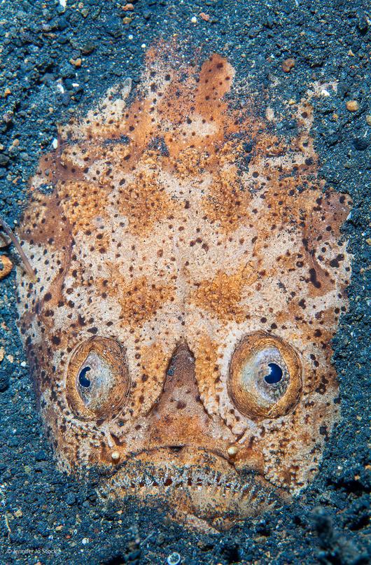 startled-by-stargazer-by-jennifer-jo-stock-from-the-uk