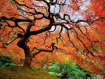 colorful-fall-photos