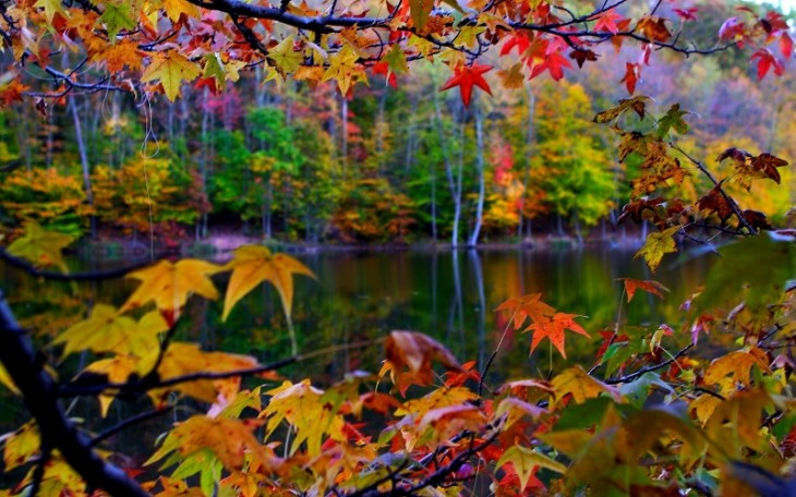 colorful-fall-photos-autumn-leaves