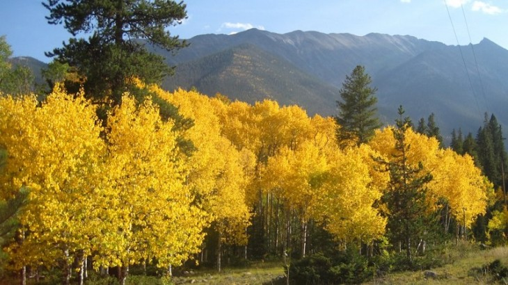 colorful-fall-photos-colorado
