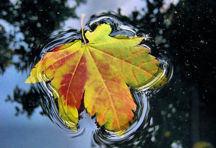 colorful-fall-photos-leaf-up-close