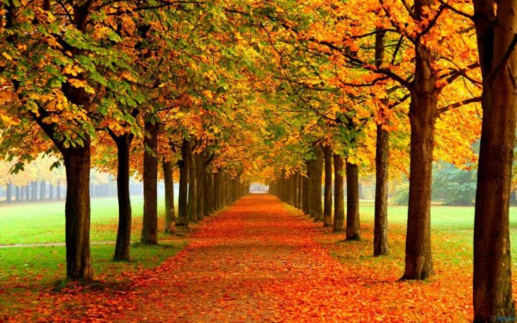 colorful-fall-photos-tree-grove