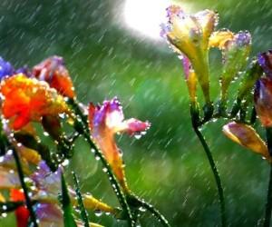 φθινόπωρο λουλούδια βροχή