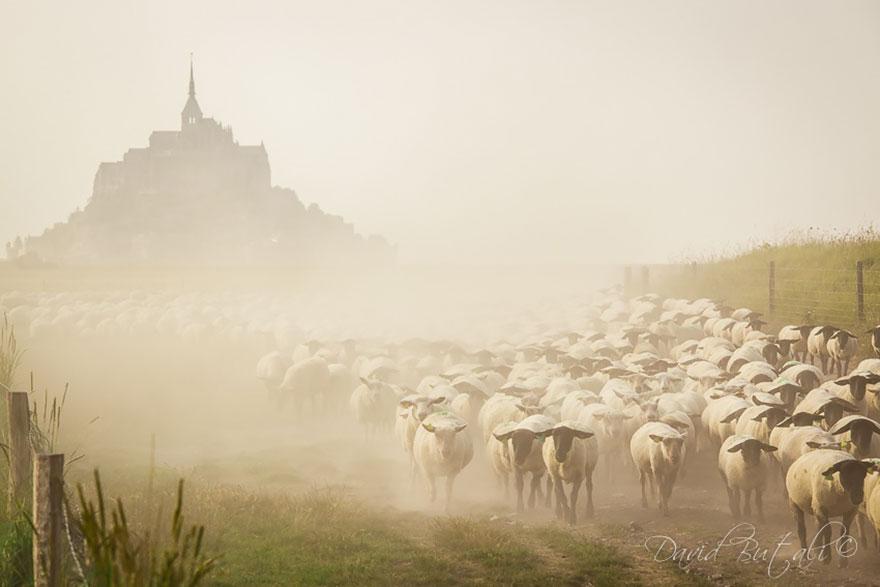 sheep-herds-around-the-world-16