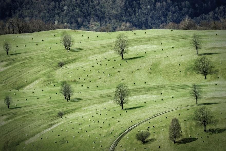 sheep-herds-around-the-world-23