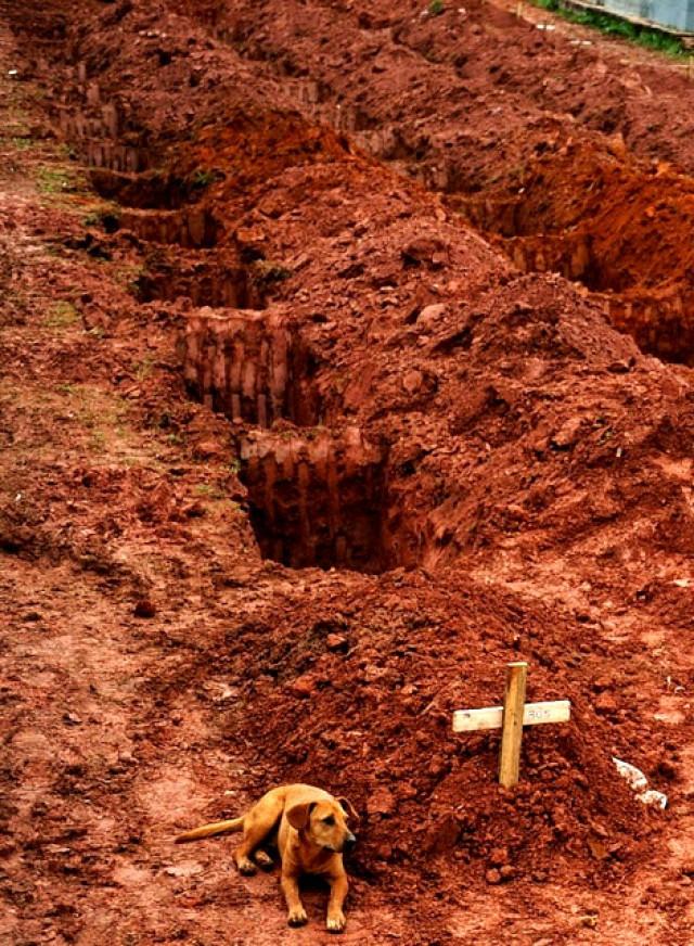 Αυτή είναι η Leao. Την μέρα που τραβήχτηκε η φωτογραφία καθόταν για δεύτερη ημέρα σερί στον τάφο του αφεντικού της που πέθανε, Βραζιλία.