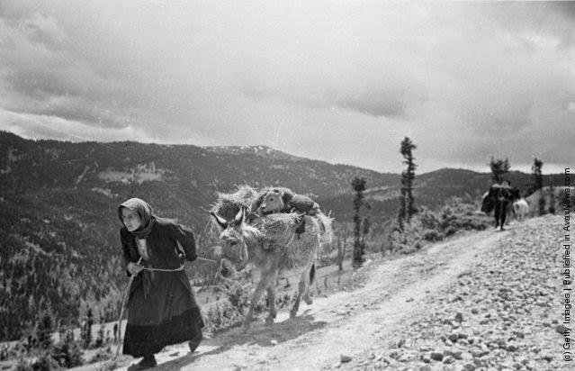 Μια γριά γυναίκα παίρνει ότι πιο πολύτιμο έχει στην κατοχή της, ένα μοσχάρι που το φορτώνει στο γάιδαρο και φεύγει μακριά από τη ζώνη της μάχης κατά τη διάρκεια του Ελληνικού Εμφυλίου Πολέμου. (Φωτογραφία από Bert Hardy / Εικόνα Δημοσίευση / Getty Images). 22 του Μάη 1948