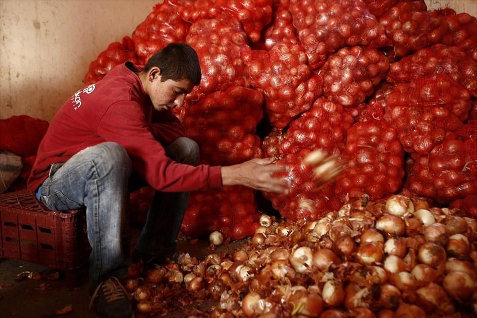 Ο δεκαπεντάχρονος Μαχμούντ Ασμά εργάζεται σε αγορά φρούτων και λαχανικών στο Σουρούτς και αμείβεται με 10 τουρκικές λίρες (3,5 ευρώ) την εβδομάδα. Με τα χρήματα αυτά βοηθά την οικογένειά του, η οποία έχει εγκατασταθεί σε τέμενος της περιοχής, καθώς ο πατέρας του είναι άνεργος. Ο Μαχμούντ αναπολεί τις ευχάριστες στιγμές της ζωής του στο Κομπάνι και ονειρεύεται την επιστροφή του στην πατρίδα του.