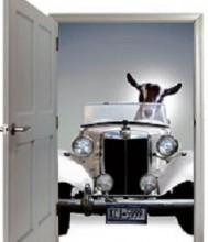 monkey-car