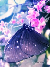 butterfly_by_bluefairy