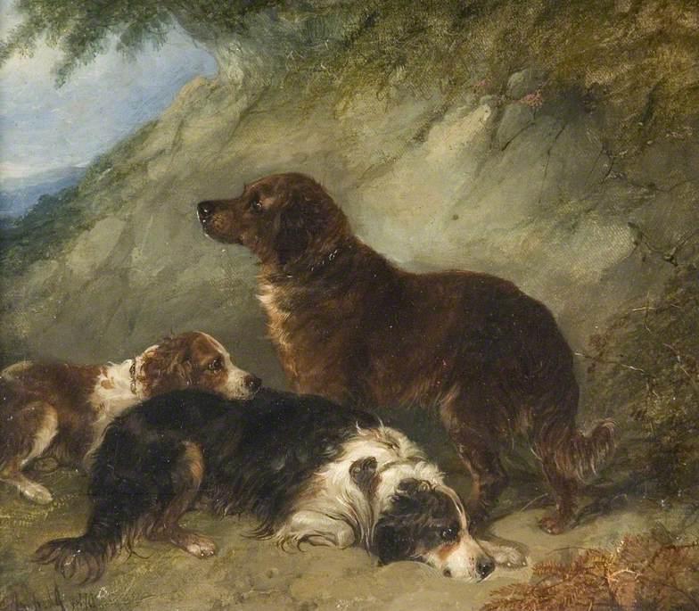 σκυλιά George Armfield - 1870