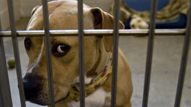 spca-dog-getty-images