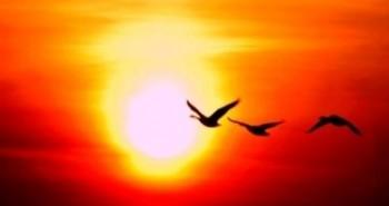 sun-poulia