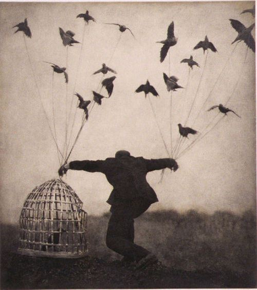 cage-crows-doves-flying-flying-man-favim-com-163505