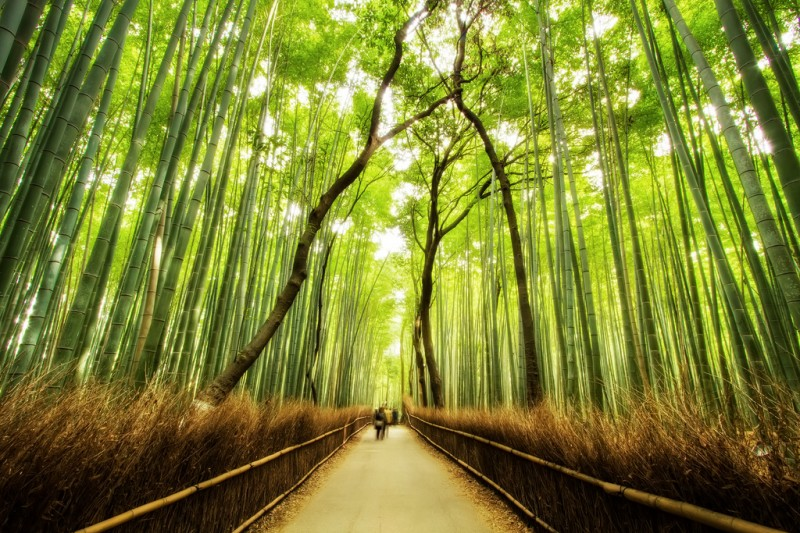 bamboo-forest-trail-kyoto-japan-5213285976-800x533