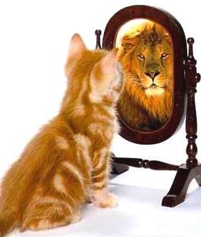 The-sense-of-I-cat-lion-