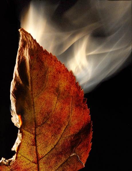 leafburn2