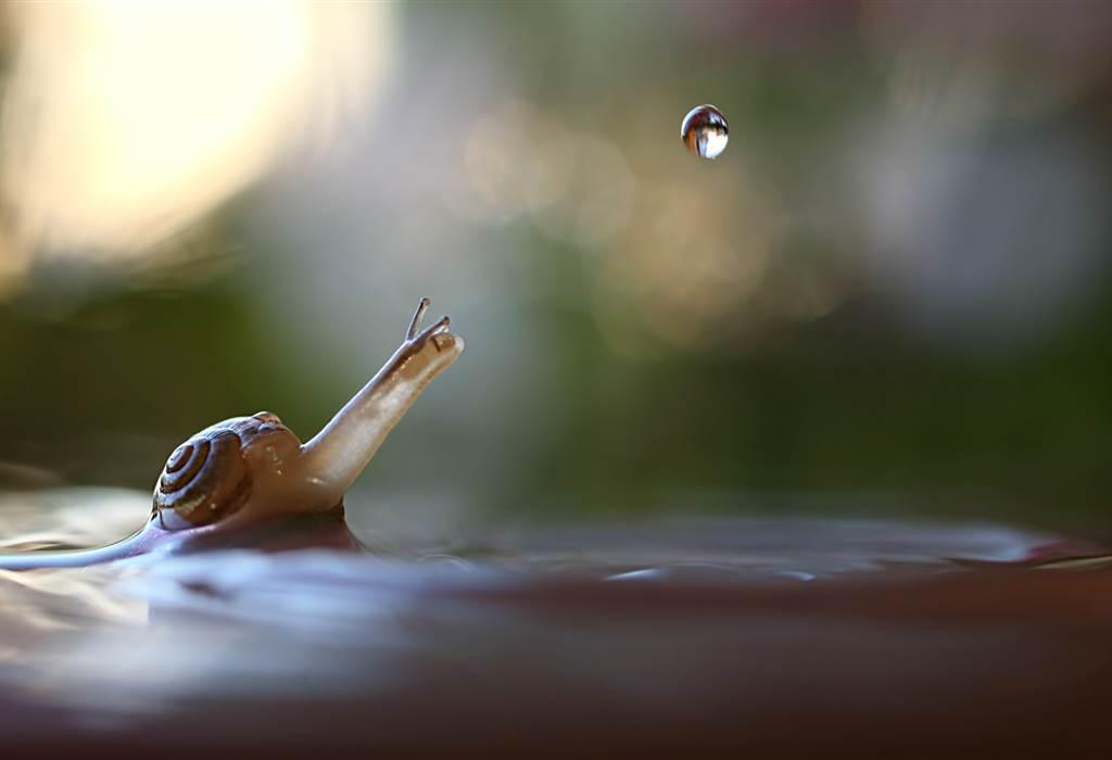 Μια στάλα πέφτει δίπλα σε ένα σαλιγκάρι. Ρωσία, @Zuma Press