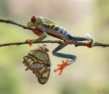 frog-butterfly-2