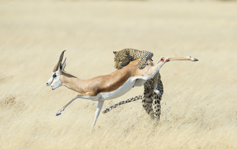 Η βραβευμένη φωτογραφία του Wim van den Heever που τραβήχτηκε στην Τανζανία κατά τη διάρκεια ενός σαφάρι.