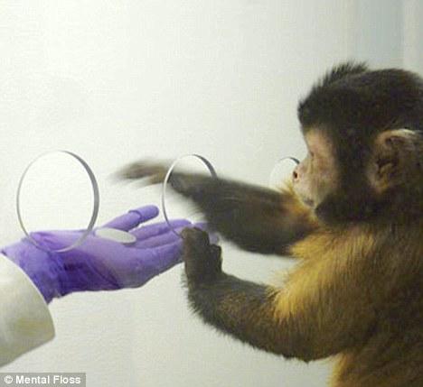 monkeymon