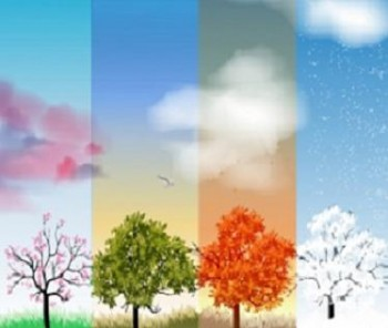 tree_with_four_seasons_vector_546378