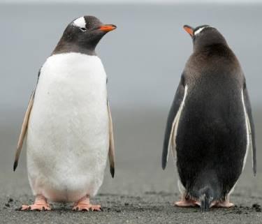 penguin_opposite