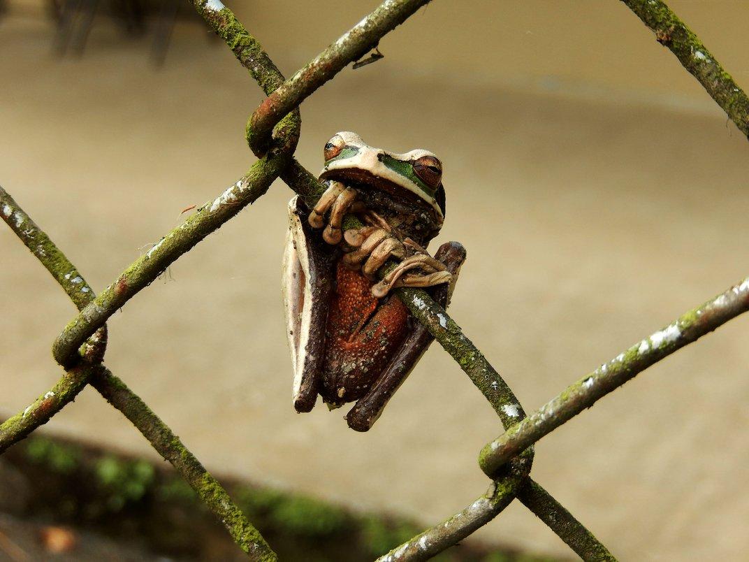 """""""Ο βάτραχος και ο φράχτης"""", © Rylan Urban"""