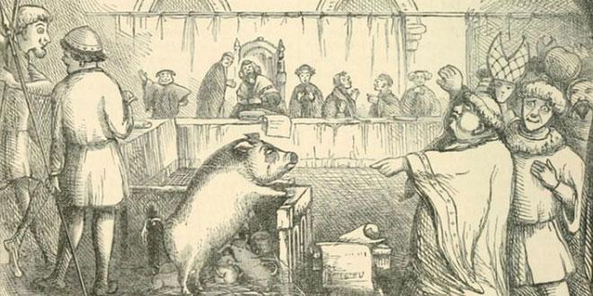pig-trial-ft