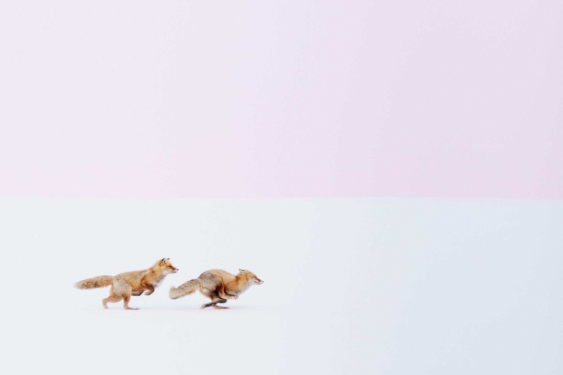 Πρώτη Θέση, Φύση: Όπου κι αν πας, θα σε ακολουθώ! Ο ρομαντισμός βρίσκεται στον αέρα. Ήταν εκείνη η ώρα της μέρας μετά το ηλιοβασίλεμα . Άκουσα μια φωνή. «Όπου κι αν πας, θα σε ακολουθώ». Photograph: Hiroki Inoue/National Geographic Travel Photographer of the Year Contest