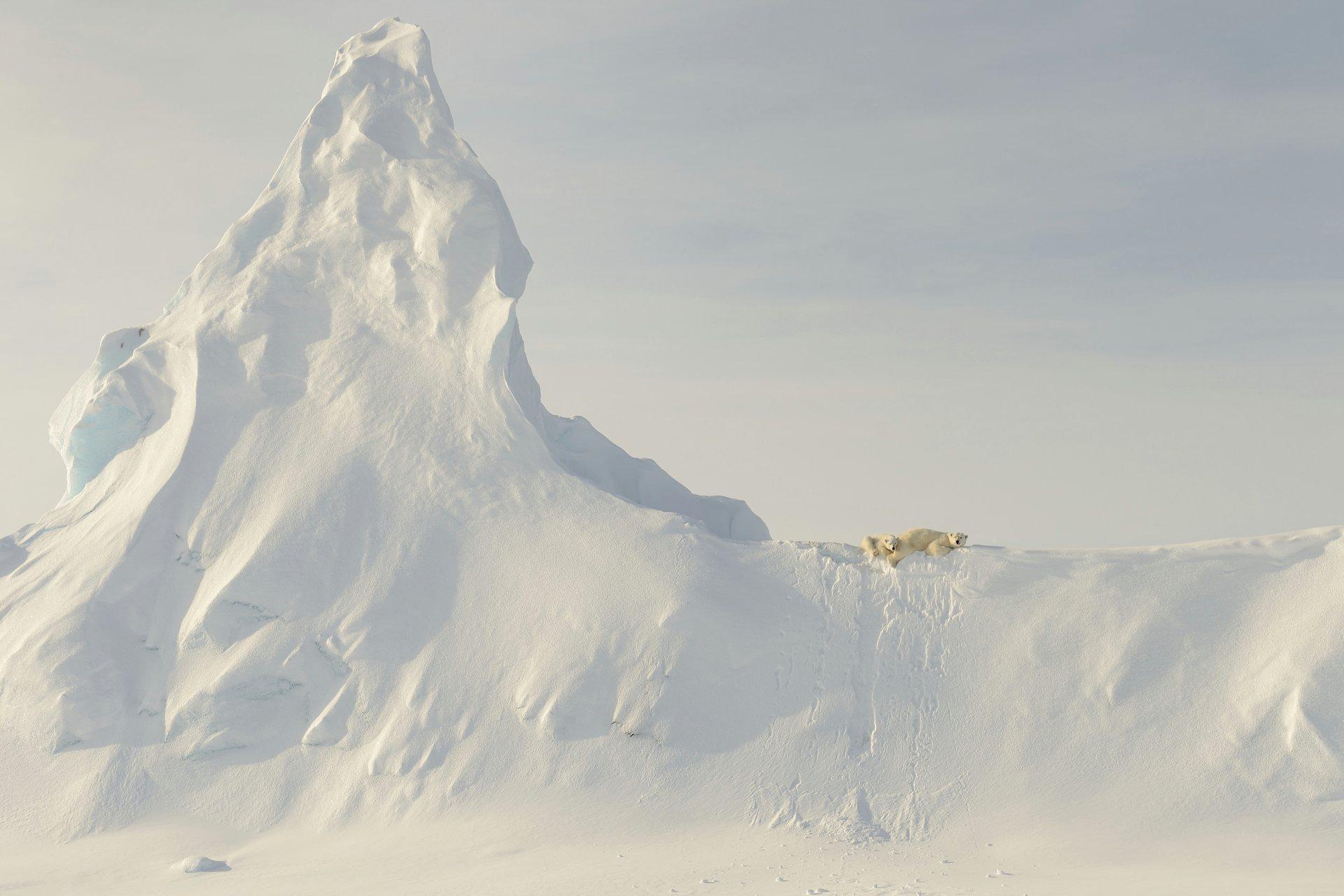 Τιμητική διάκριση, φύση: Bears on a Berg. Αυτή η φωτογραφία είχε τραβηχτεί μακριά, σε μια παγωμένη θάλασσα του Davis Straight στην ακτή της νήσου Baffin. Αυτή η μητέρα και το μωρό της είναι σκαρφαλωμένοι στην κορυφή ενός τεράστιου χιονισμένου παγόβουνου. Photograph: John Rollins/National Geographic Travel Photographer of the Year Contest