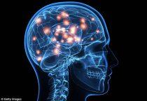Το Διαδίκτυο και το Μυαλό μας είναι πιο όμοια απ' όσο νομίζουμε